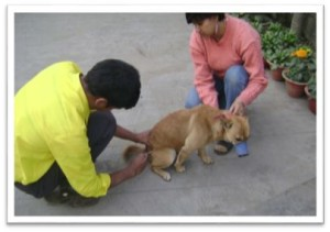 dog-rescued-rabies-control-assam