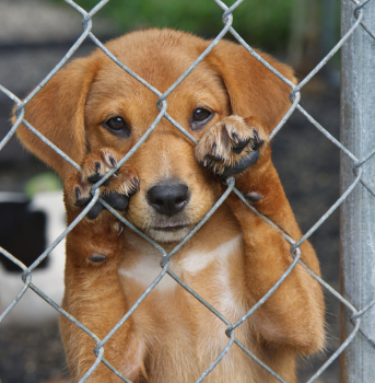 10 reasons to adopt a dog now jbf
